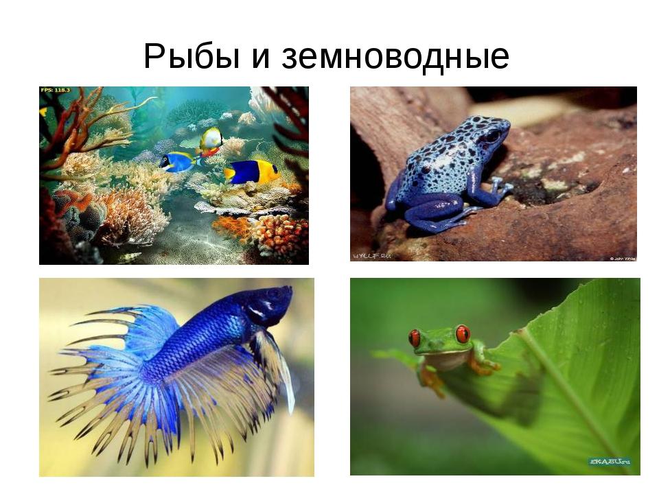 Рыбы и земноводные