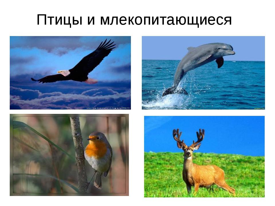 Птицы и млекопитающиеся