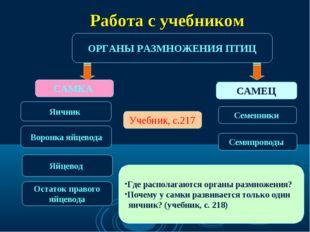 ОРГАНЫ РАЗМНОЖЕНИЯ ПТИЦ САМКА САМЕЦ Яичник Семенники Учебник, с.217 Воронка я