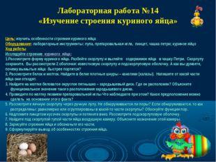 Лабораторная работа №14 «Изучение строения куриного яйца» Цель: изучить особе
