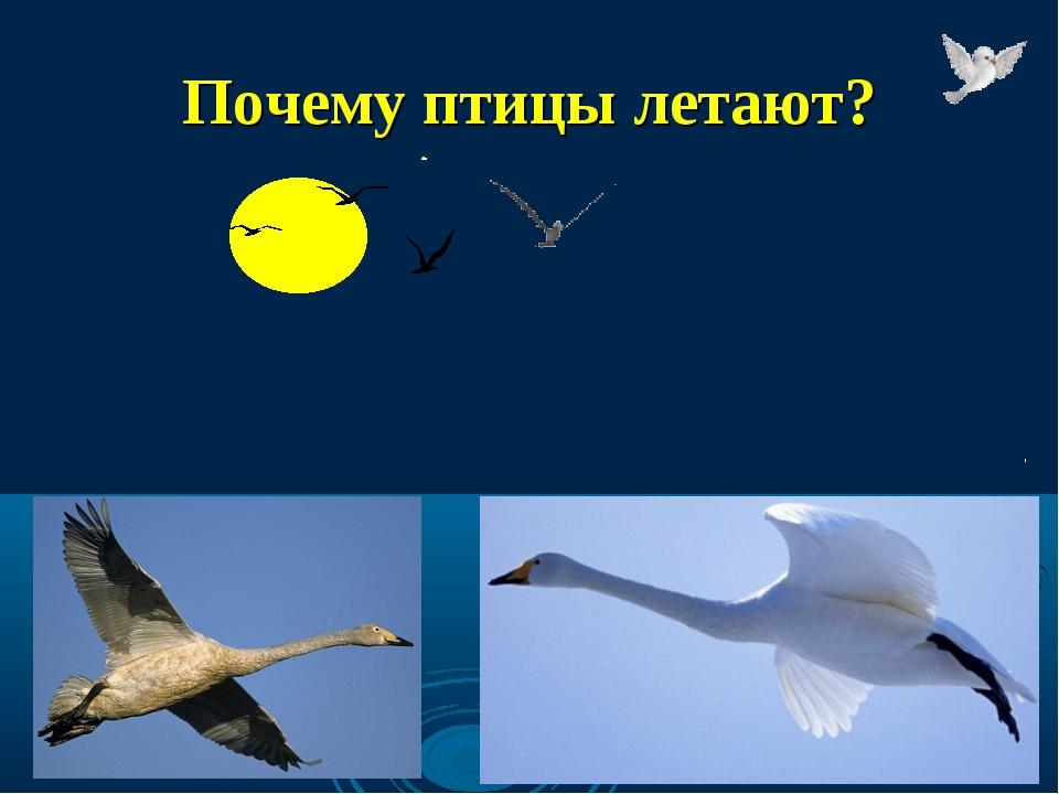 Почему птицы летают?