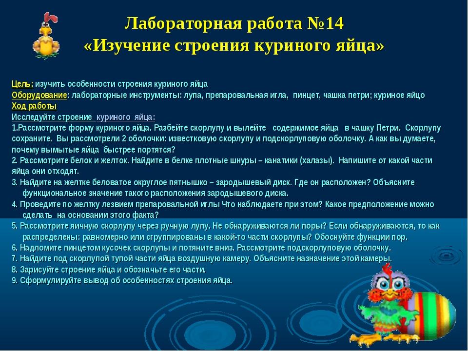 Лабораторная работа №14 «Изучение строения куриного яйца» Цель: изучить особе...