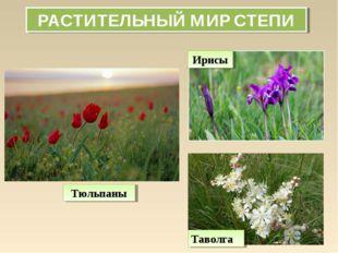 РАСТИТЕЛЬНЫЙ МИР СТЕПИ Тюльпаны Ирисы Таволга