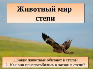 Животный мир степи Какие животные обитают в степи? Как они приспособились к ж