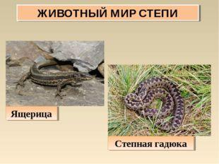 ЖИВОТНЫЙ МИР СТЕПИ Ящерица Степная гадюка
