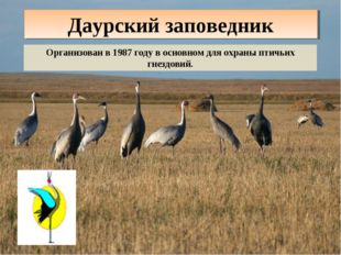 Даурский заповедник Организован в 1987 году в основном для охраны птичьих гне