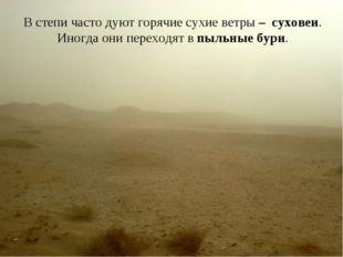 В степи часто дуют горячие сухие ветры – суховеи. Иногда они переходят в пыль