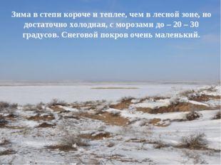 Зима в степи короче и теплее, чем в лесной зоне, но достаточно холодная, с мо