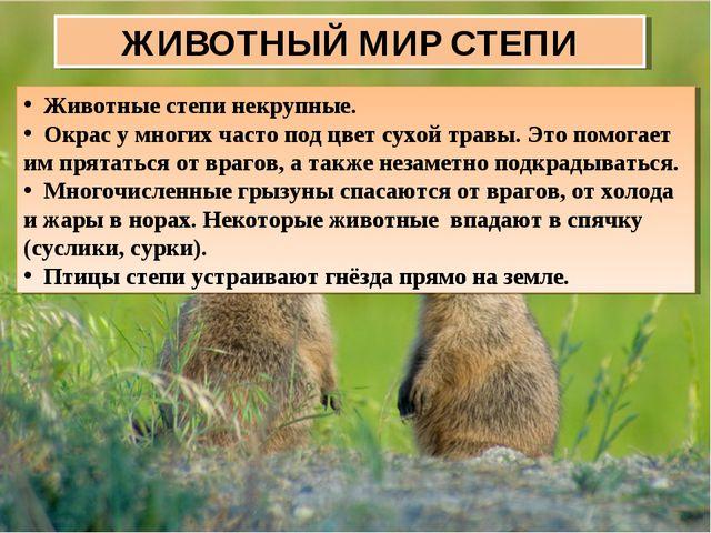 ЖИВОТНЫЙ МИР СТЕПИ Животные степи некрупные. Окрас у многих часто под цвет су...