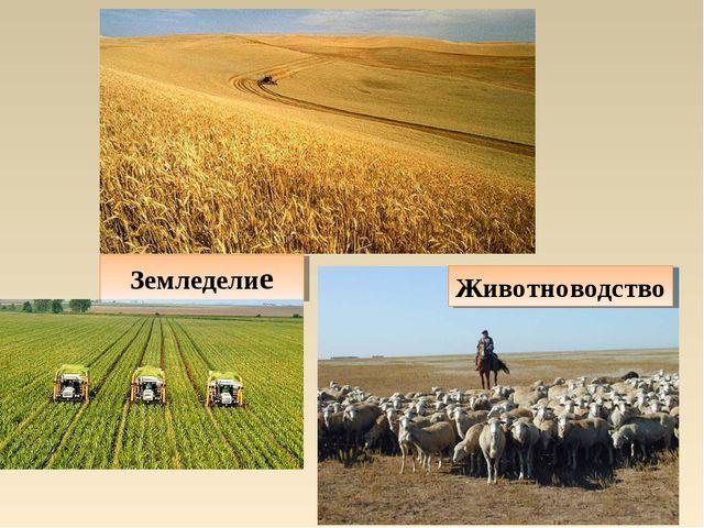 Земледелие Животноводство