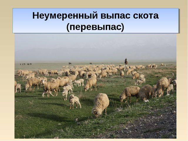 Неумеренный выпас скота (перевыпас)