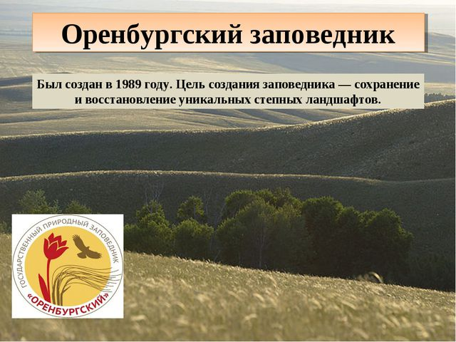 Оренбургский заповедник Был создан в 1989 году. Цель создания заповедника — с...