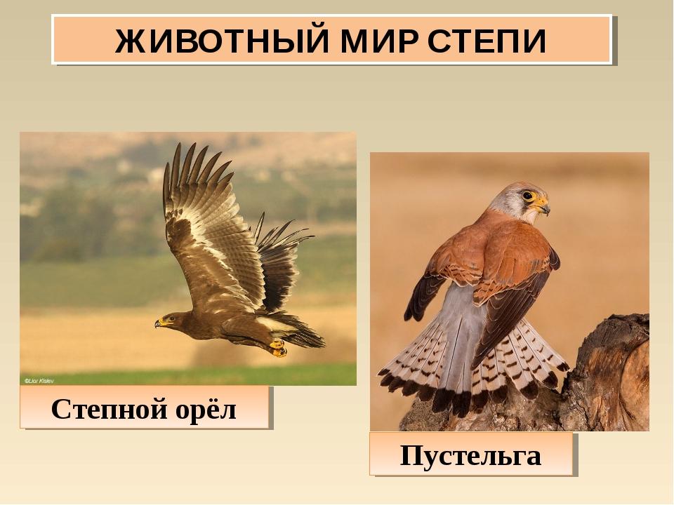 ЖИВОТНЫЙ МИР СТЕПИ Степной орёл Пустельга