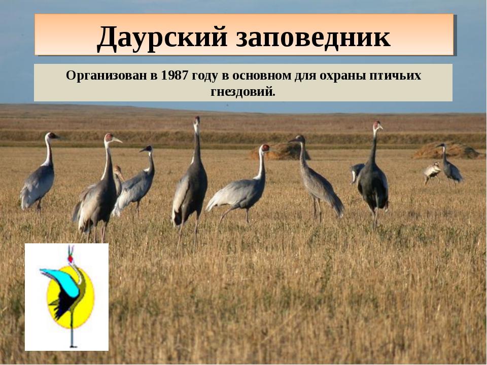 Даурский заповедник Организован в 1987 году в основном для охраны птичьих гне...