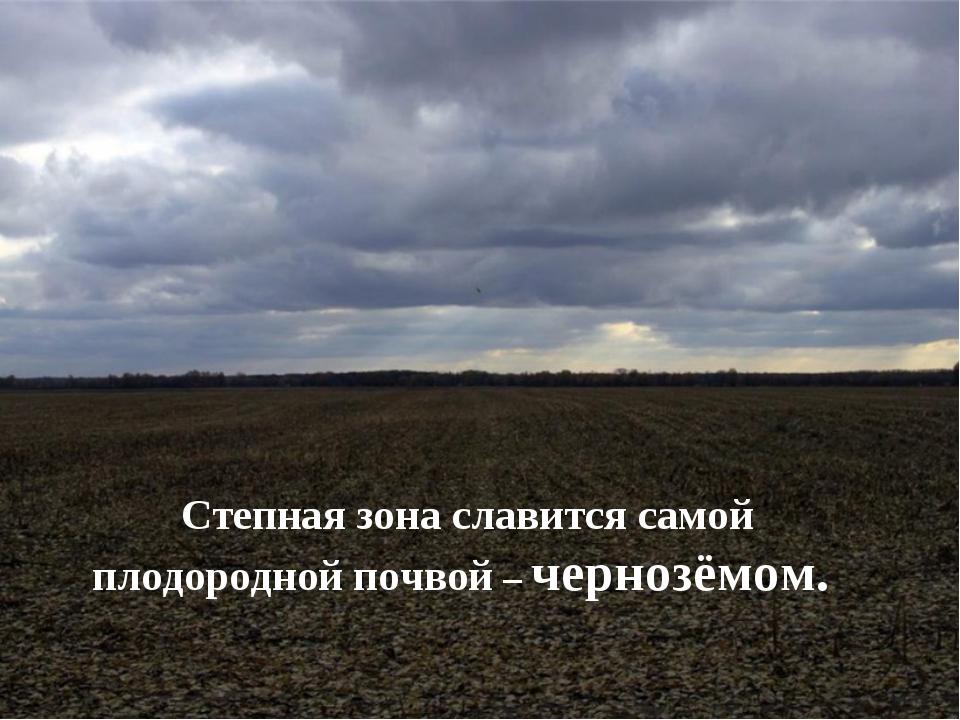 Степная зона славится самой плодородной почвой – чернозёмом.
