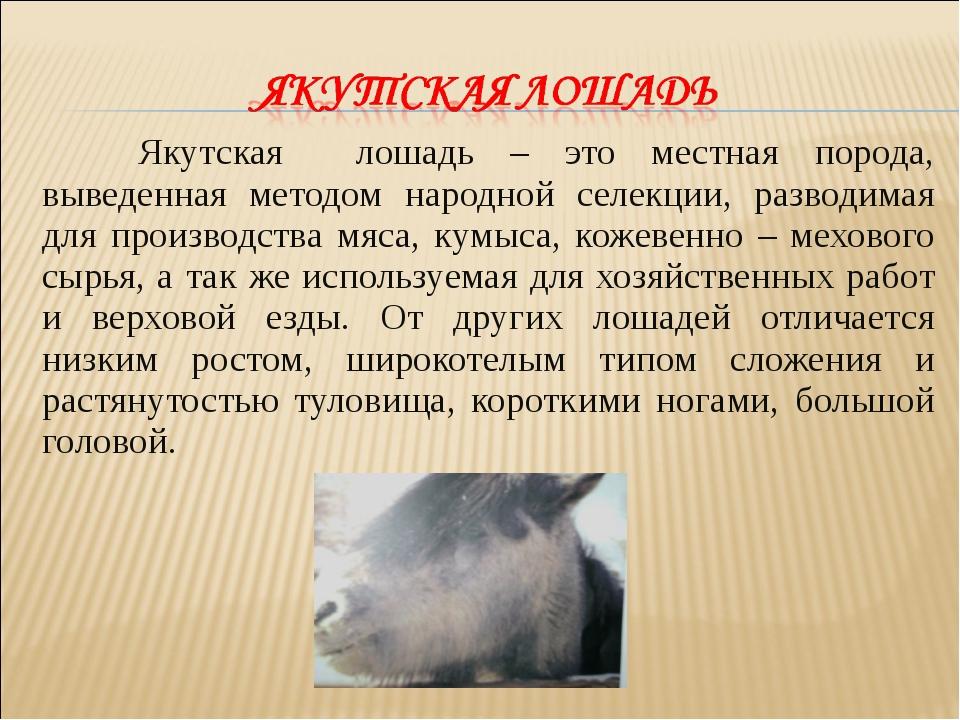 Якутская лошадь – это местная порода, выведенная методом народной селекции,...