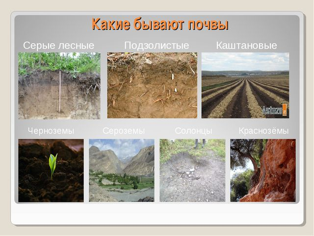 Какие бывают почвы Серые лесные Черноземы Подзолистые Солонцы Каштановые Крас...