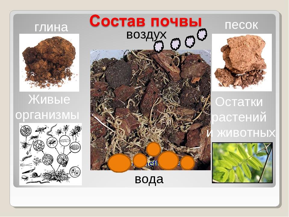 глина песок Живые организмы Остатки растений и животных вода воздух