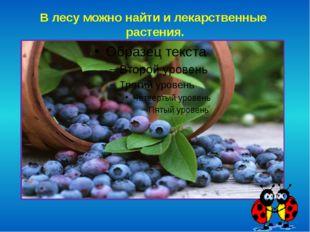 В лесу можно найти и лекарственные растения.