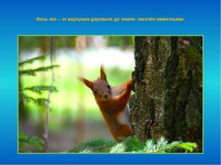 Весь лес – от верхушек деревьев до земли- заселен животными.