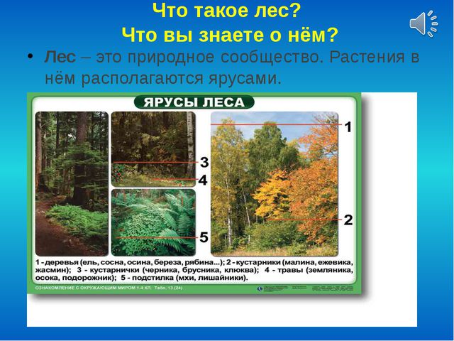 Что такое лес? Что вы знаете о нём? Лес – это природное сообщество. Растения...