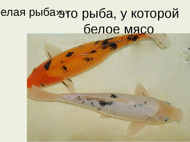 «Белая рыба» - это рыба, у которой белое мясо
