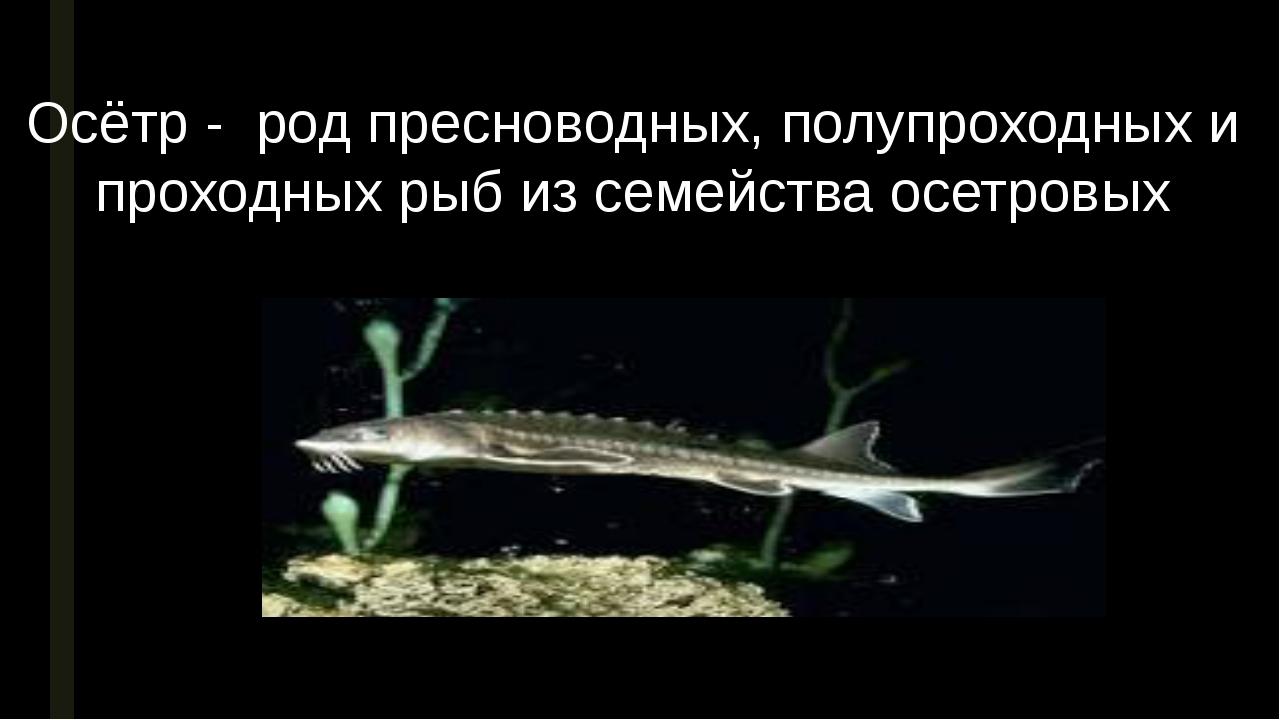 Осётр - род пресноводных, полупроходных и проходных рыб из семейства осетровых