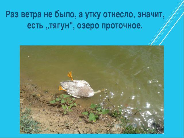 """Раз ветра не было, а утку отнесло, значит, есть """"тягун"""", озеро проточное."""