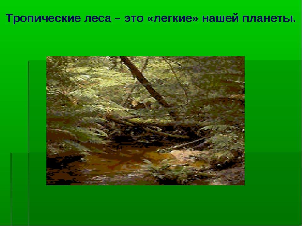 Тропические леса – это «легкие» нашей планеты.