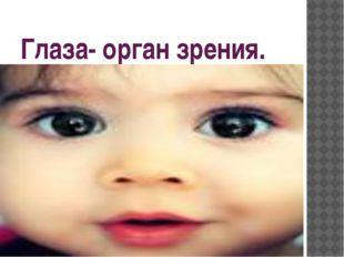 Глаза- орган зрения.
