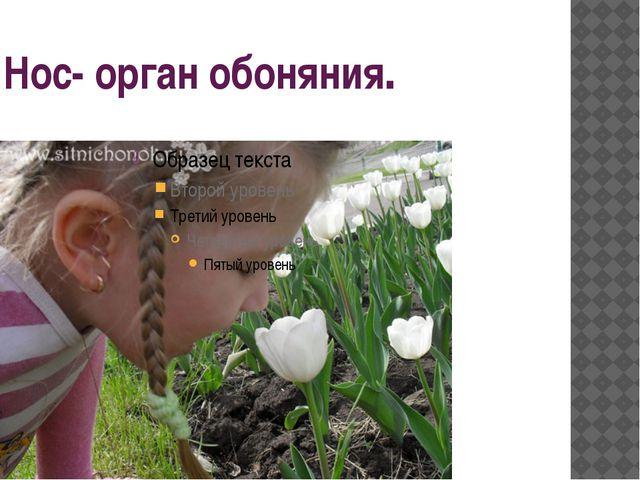 Нос- орган обоняния.