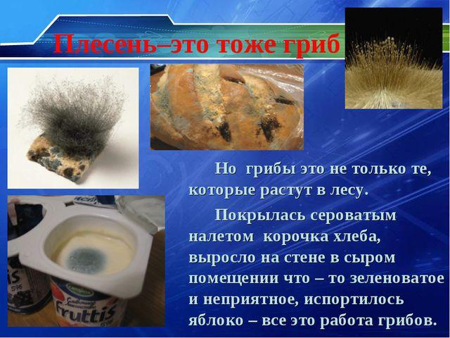 Плесень–это тоже гриб Но грибы это не только те, которые растут в лесу. Покры...