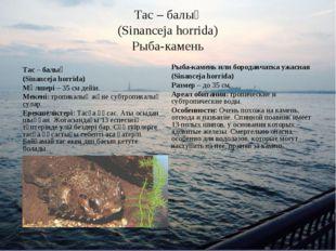 Тас – балық (Sinanceja horrida) Рыба-камень Тас – балық (Sinanceja horrida) М