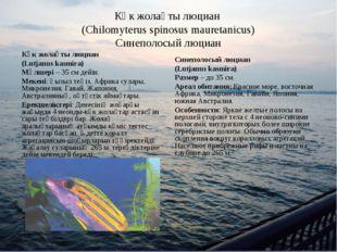 Көк жолақты люциан (Chilomyterus spinosus mauretanicus) Синеполосый люциан Кө