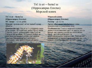 Теңіз ат – балығы (Hippocampus Erectus) Морской конек Теңіз ат – балығы (Hipp