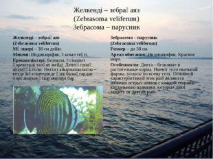 Желкенді – зебрақаяз (Zebrasoma veliferum) Зебрасома – парусник Желкенді – зе