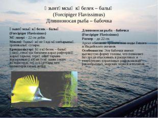 Ұзынтұмсық көбелек – балық (Forcipiger Flavissimus) Длинноносая рыба – бабочк