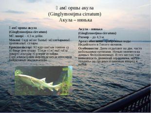 Қамқоршы акула (Ginglymostjma cirratum) Акула – нянька Қамқоршы акула (Gingly