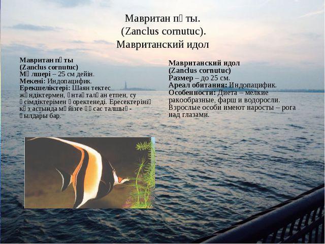 Мавритан пұты. (Zanclus cornutuc). Мавританский идол Мавритан пұты (Zanclus c...