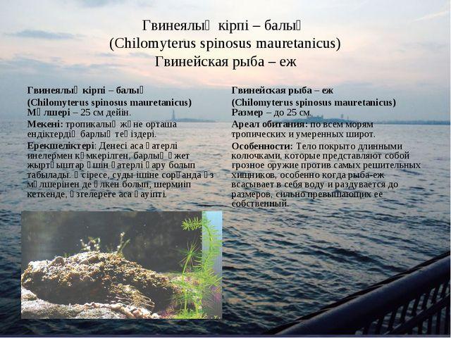 Гвинеялық кірпі – балық (Chilomyterus spinosus mauretanicus) Гвинейская рыба...