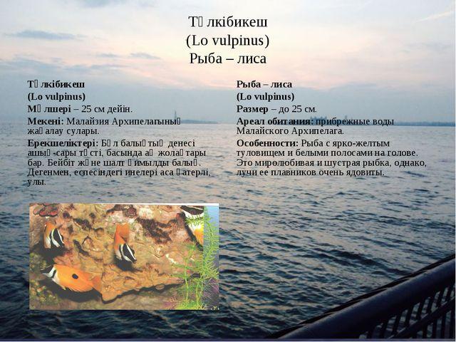 Түлкібикеш (Lo vulpinus) Рыба – лиса Түлкібикеш (Lo vulpinus) Мөлшері – 25 см...