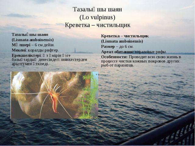 Тазалықшы шаян (Lo vulpinus) Креветка – чистильщик Тазалықшы шаян (Lismata am...