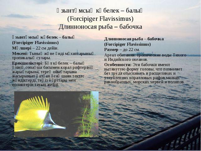 Ұзынтұмсық көбелек – балық (Forcipiger Flavissimus) Длинноносая рыба – бабочк...