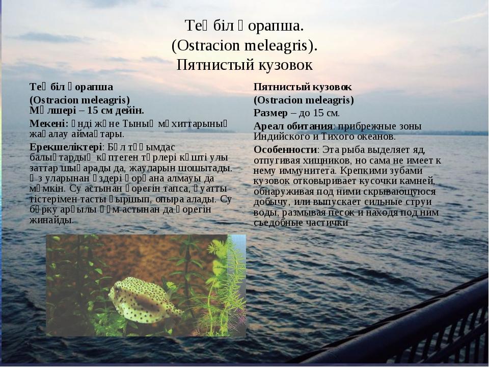 Теңбіл қорапша. (Ostracion meleagris). Пятнистый кузовок Теңбіл қорапша (Ostr...