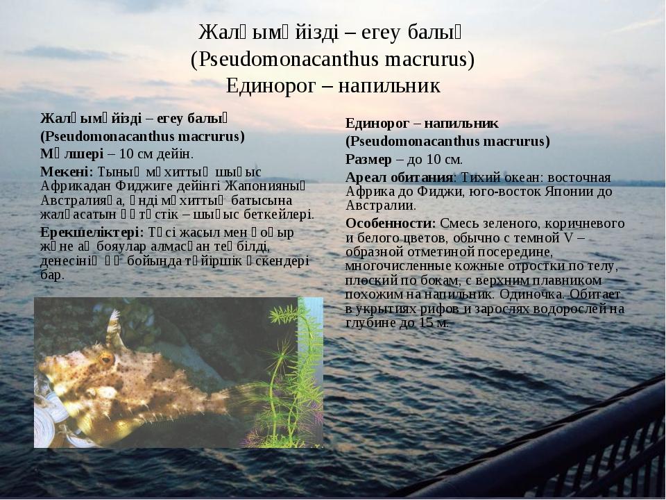 Жалқымүйізді – егеу балық (Pseudomonacanthus macrurus) Единорог – напильник Ж...