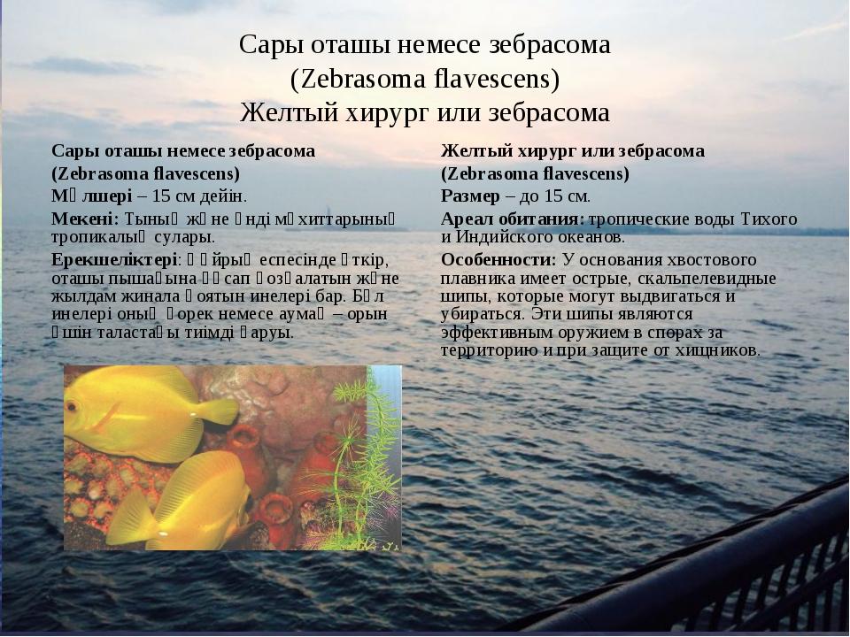 Сары оташы немесе зебрасома (Zebrasoma flavescens) Желтый хирург или зебрасом...