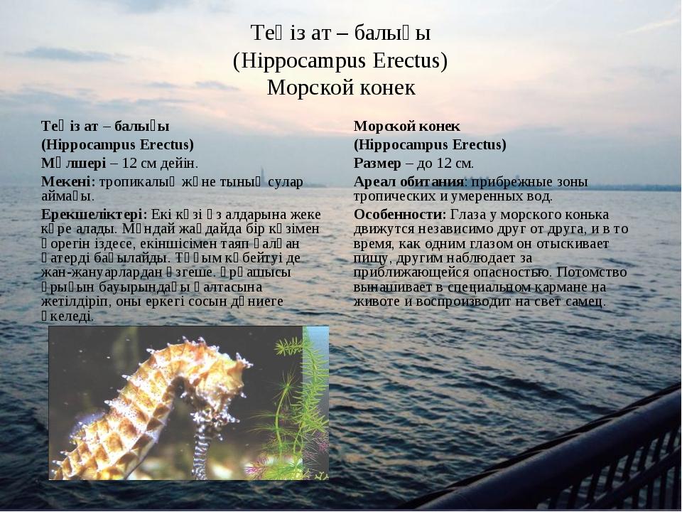 Теңіз ат – балығы (Hippocampus Erectus) Морской конек Теңіз ат – балығы (Hipp...