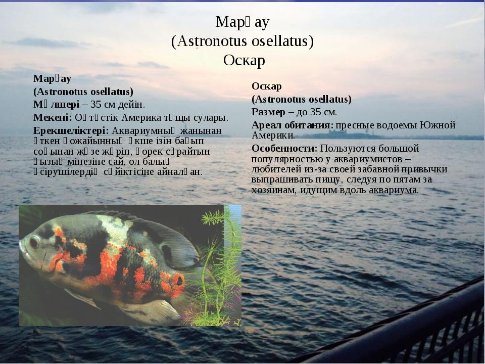 Марғау (Astronotus osellatus) Оскар Марғау (Astronotus osellatus) Мөлшері – 3...