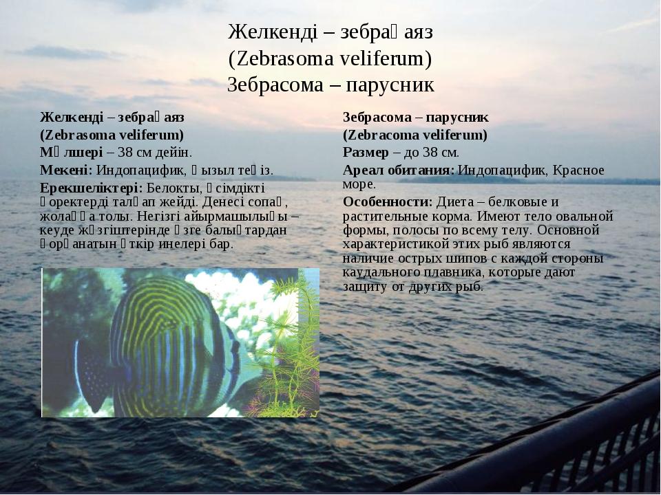Желкенді – зебрақаяз (Zebrasoma veliferum) Зебрасома – парусник Желкенді – зе...