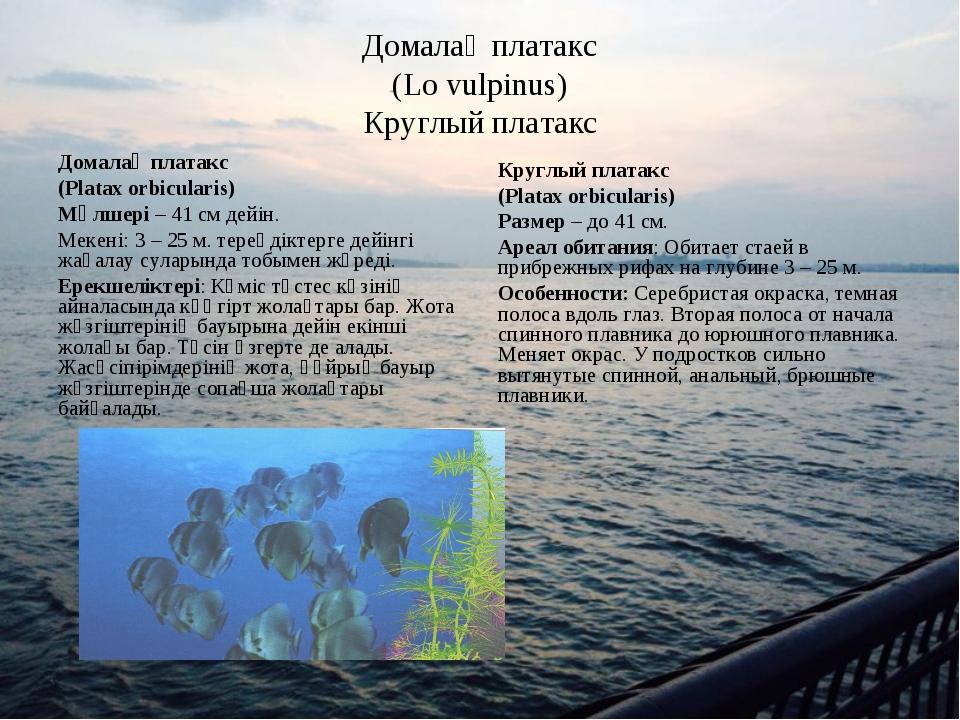 Домалақ платакс (Lo vulpinus) Круглый платакс Домалақ платакс (Platax orbicul...